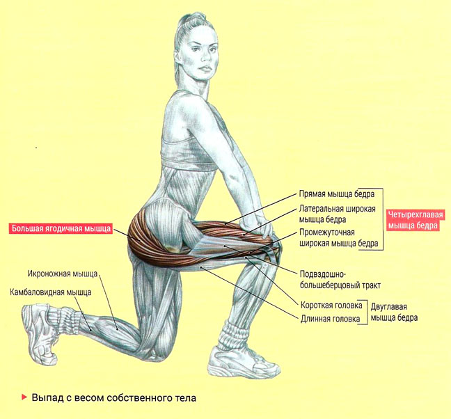 Работа мышц при выпадах вперед
